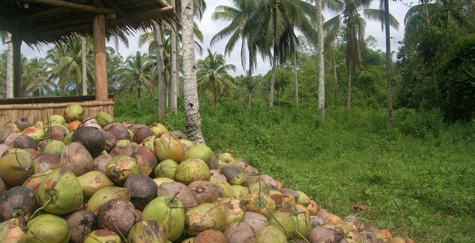 Senate approves Coco Levy Trust Fund bill
